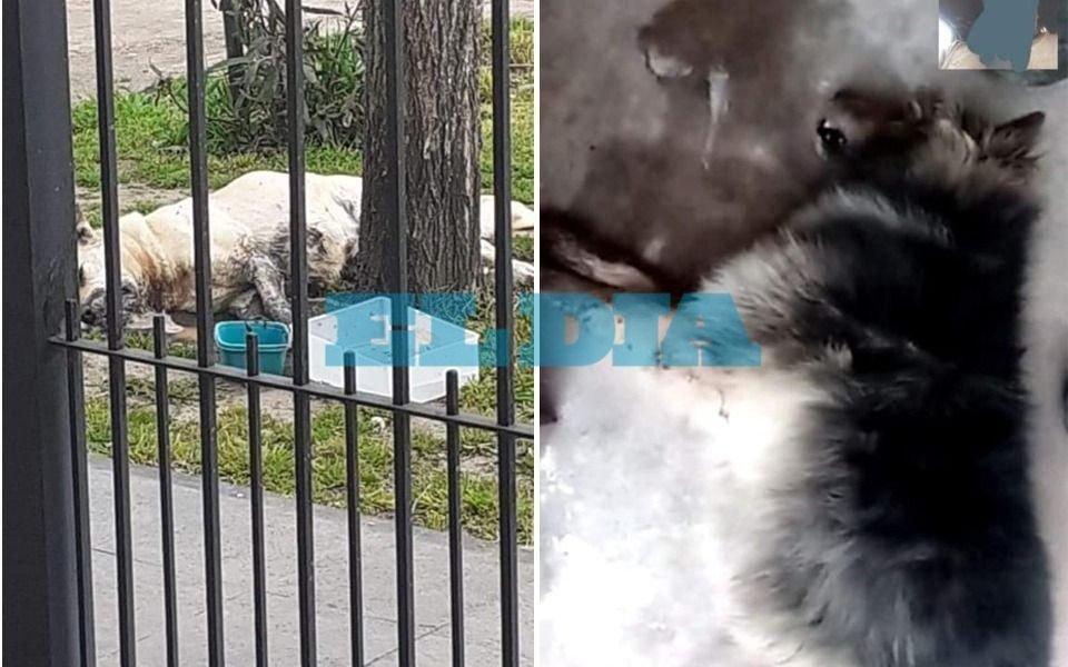 Olmos: denuncian que un vecino envenenó a cuatro perros que aparecieron muertos