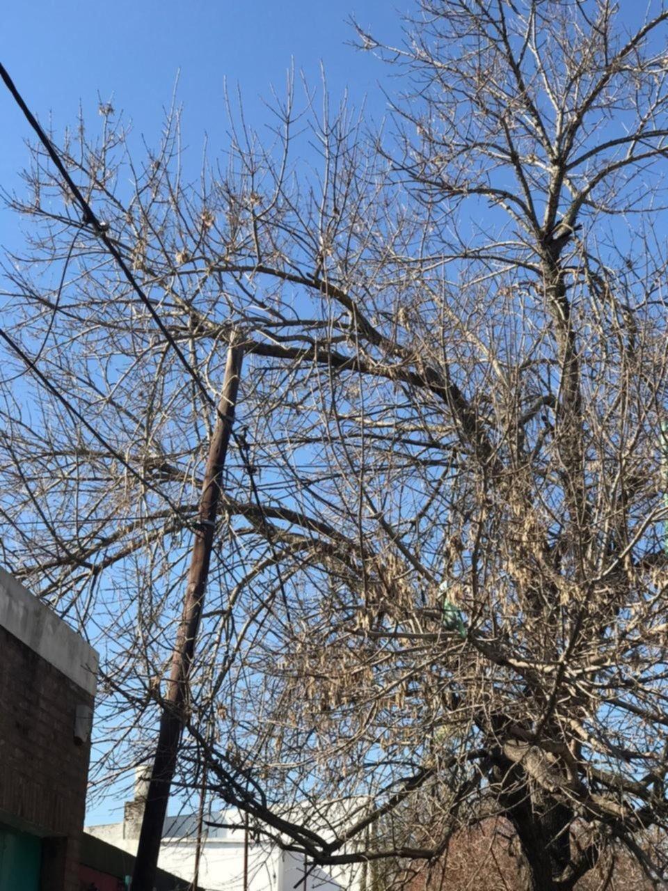 Reclaman la poda de un árbol cuyas ramas tocan el cableado eléctrico