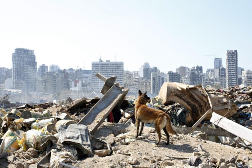 Beirut en ruinas: una tragedia que despierta angustia y temor entre los libaneses de La Plata