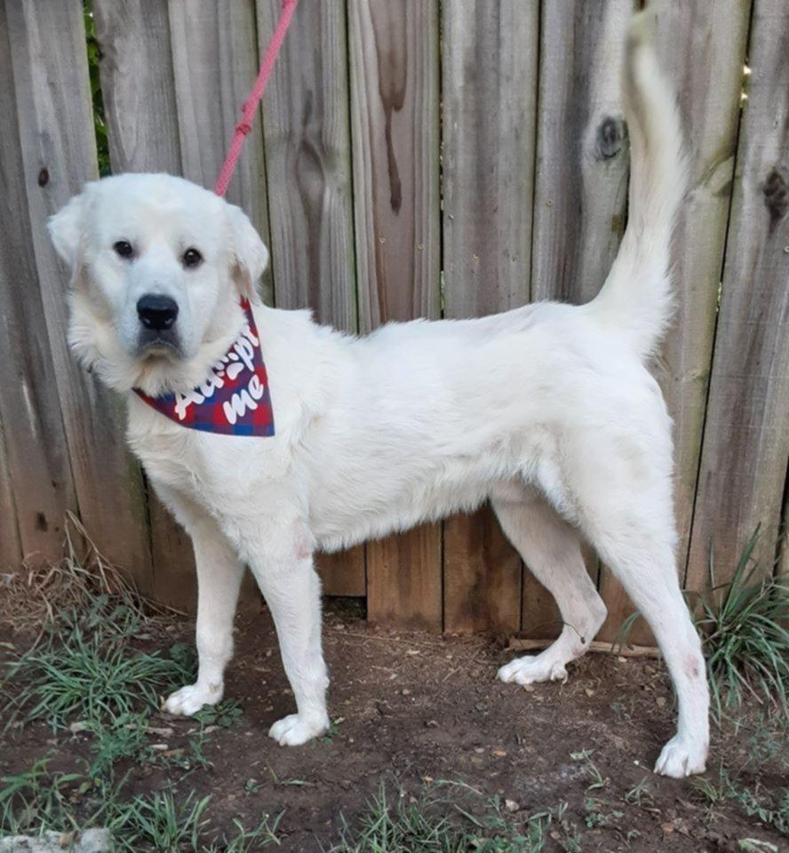 ¿Oveja o perro? Dejaron al animal abandonado y le sacaron ¡15 kilos de pelo!