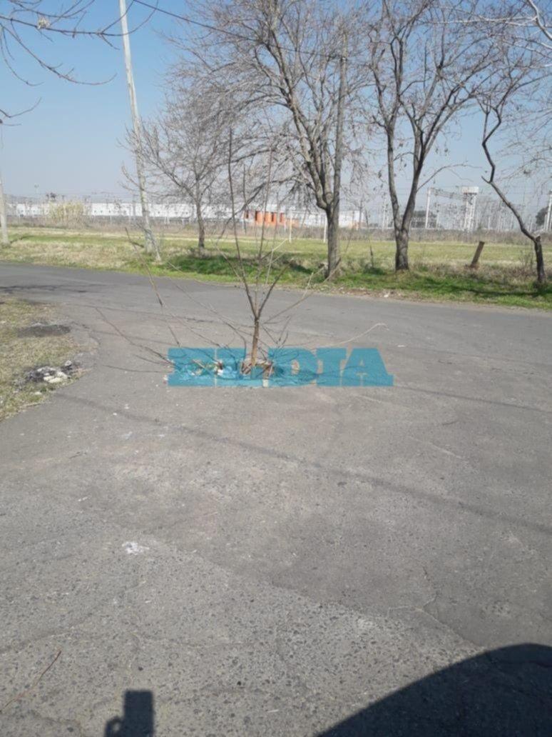 """En Tolosa """"plantaron"""" una rama para evitar accidentes por una boca de tormenta sin tapa"""