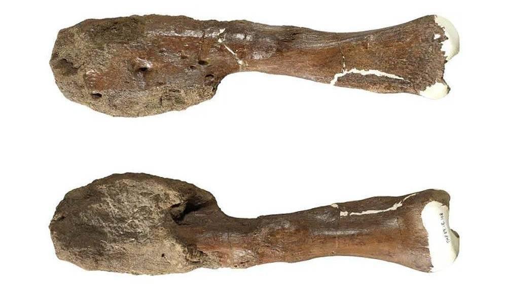 Dinosaurios: identifican por primera vez un tumor en un fósil del Cretácico