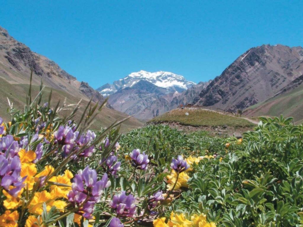 Imagenes De Paisajes De Primavera: Mendoza: Románticos Paisajes En Primavera