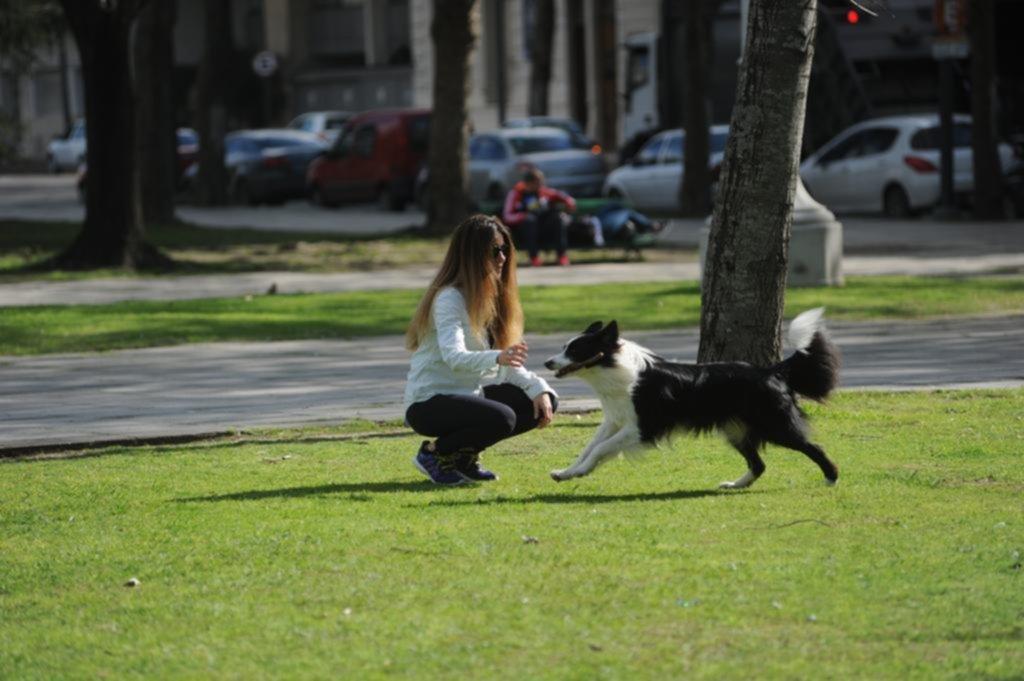 Mantener una mascota moderna puede costar hasta $2.500 por mes