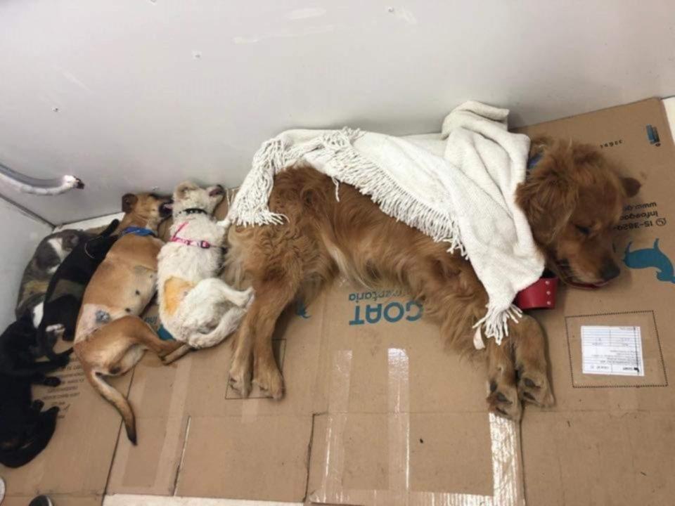 Mascotas: el peligro de las castraciones clandestinas