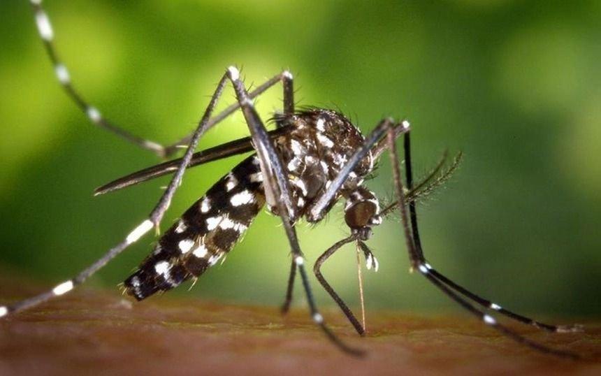 Mosquitos genéticamente modificados se multiplican sin control en Brasil