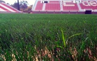 Empezó a crecer el césped natural en el estadio albirrojo
