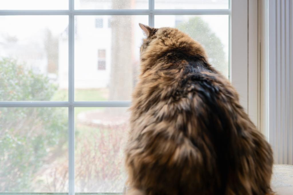 Por las mascotas con obesidad, crecen las opciones y las dietas para los animales de la casa