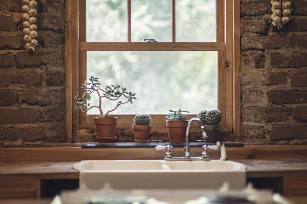 Las plantas redecoran los ambientes