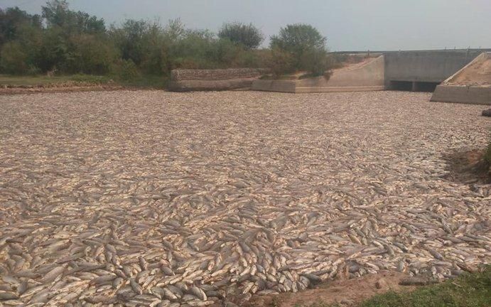 Imágenes impactantes: miles de peces muertos en Formosa