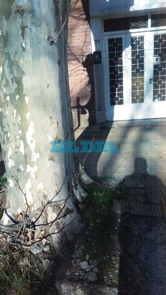 Vecinos de 38 entre 14 y 15 piden el reemplazo de un árbol que rompe veredas y caños
