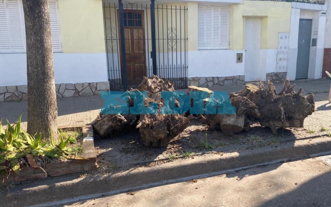 Hartazgo en 3 y 69 por restos de un árbol que permanecen en la vereda desde mayo