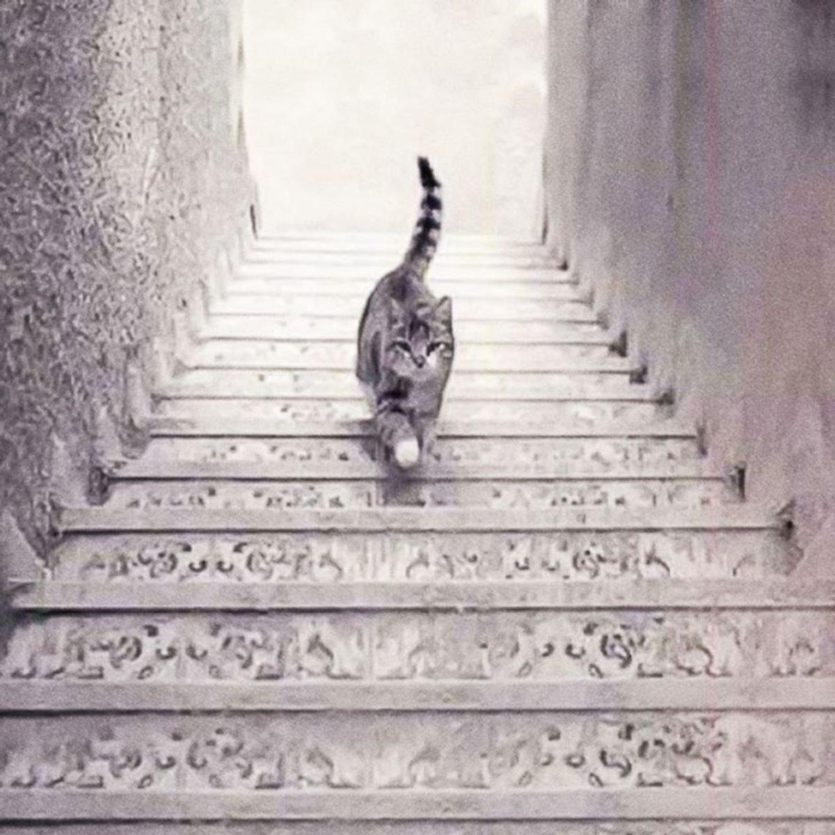 ¿El gato sube o baja la escalera?: qué hay detrás del reto viral que revela tu personalidad