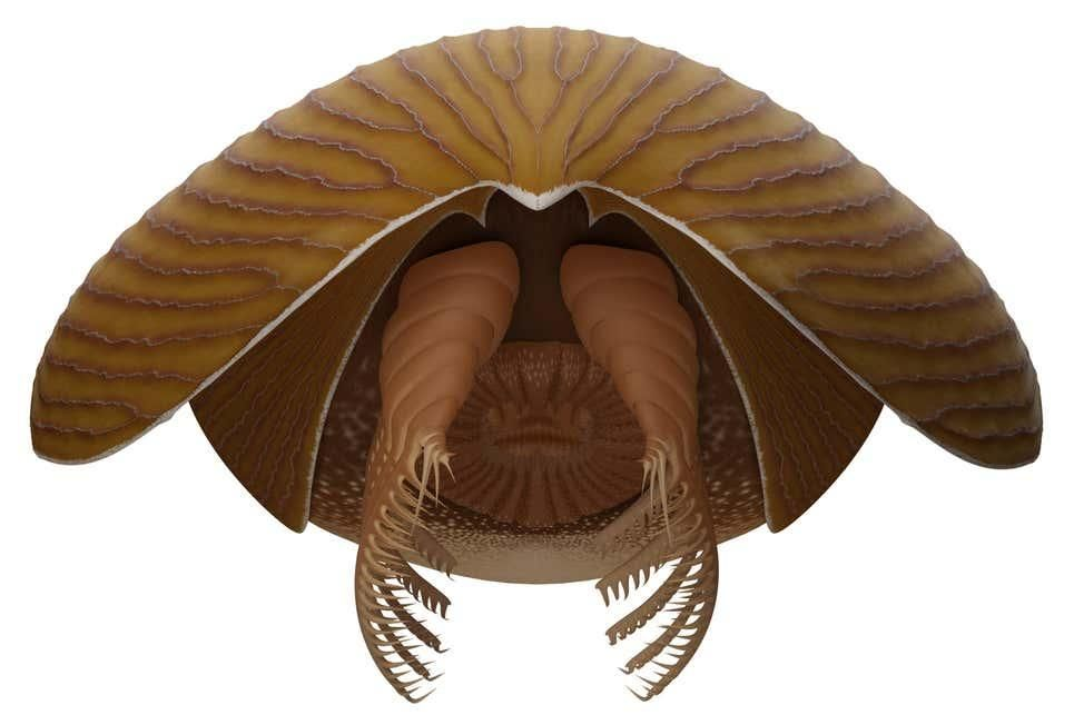 De 500 millones de años: encuentran en Canadá el fósil de un enorme depredador