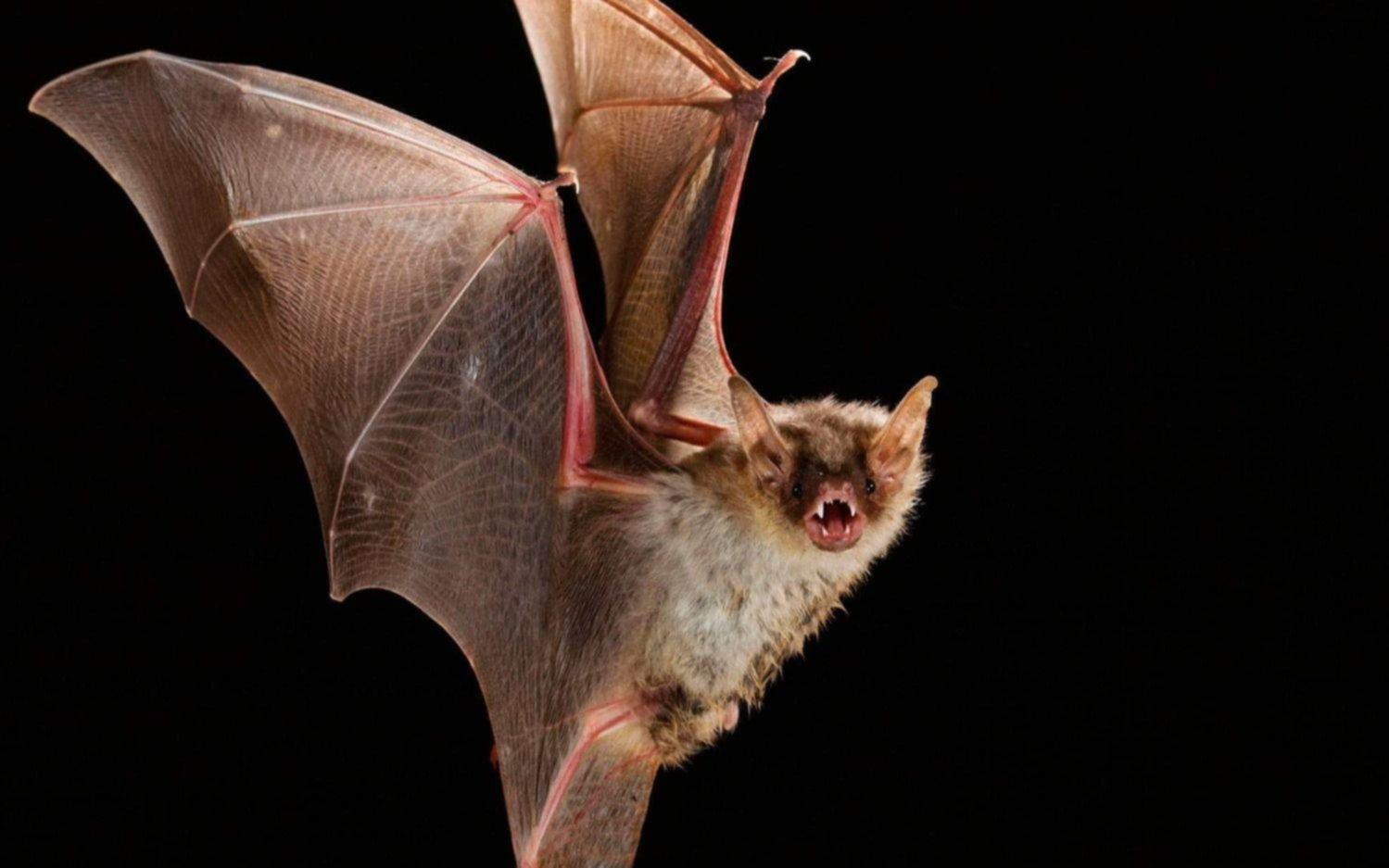 Alarma en la ciencia por hallazgo de virus similar al del coronavirus en murciélagos de Laos