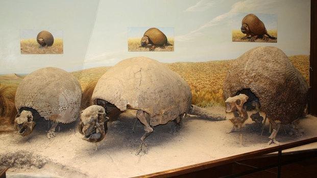 """Hallan los restos """"casi completos"""" de un Gliptodonte"""