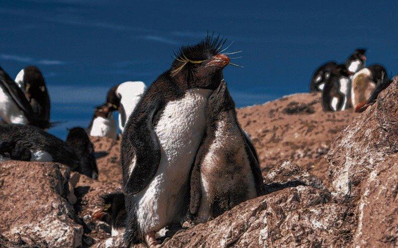 Arrancó el avistaje de pingüinos