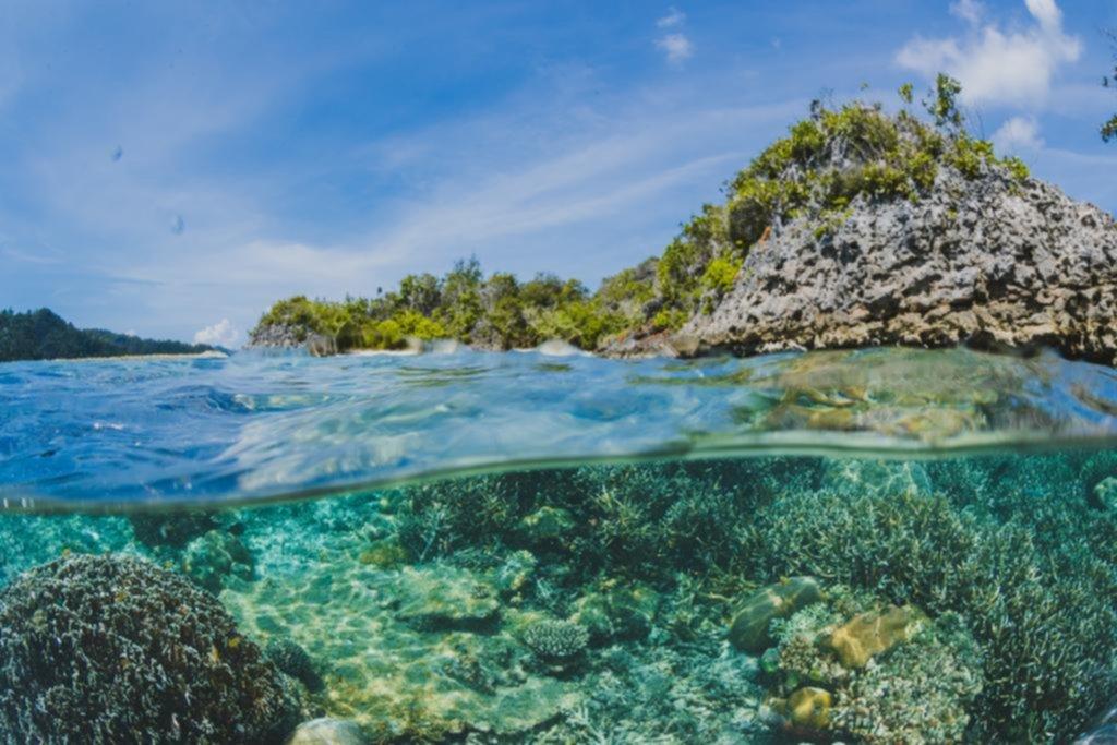 Hallazgo de científicos locales ayudará a entender el impacto del cambio climático en el mar