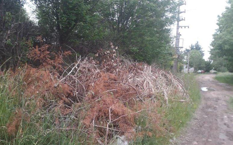 Las ramas que nadie retira, escondite para un asalto en Etcheverry