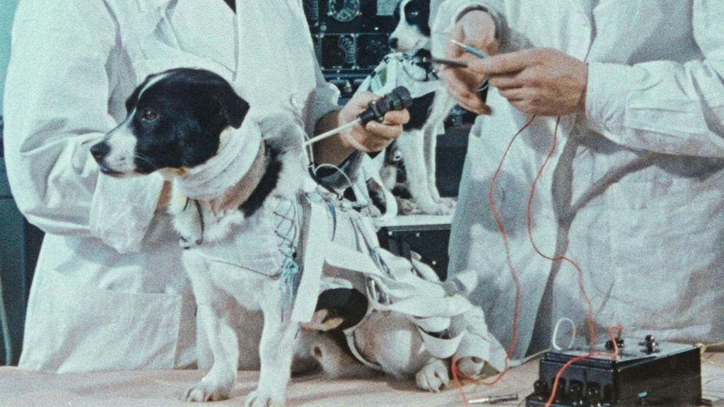 """""""Space Dogs"""": todos los perros van al cielo"""
