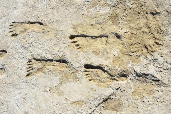 Huellas en Nuevo México: una prueba de presencia humana en América hace 23.000 años