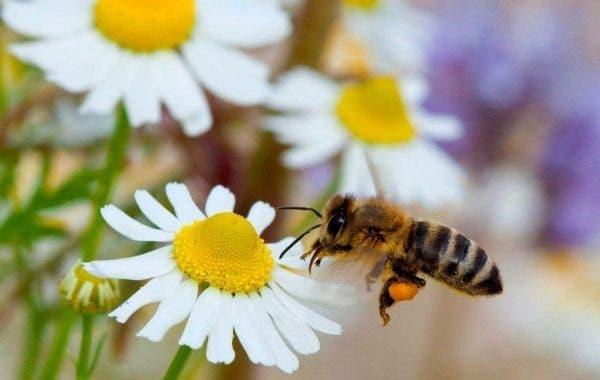 Estamos más expuestos: picaduras de insectos: cómo prevenirlas y tratarlas