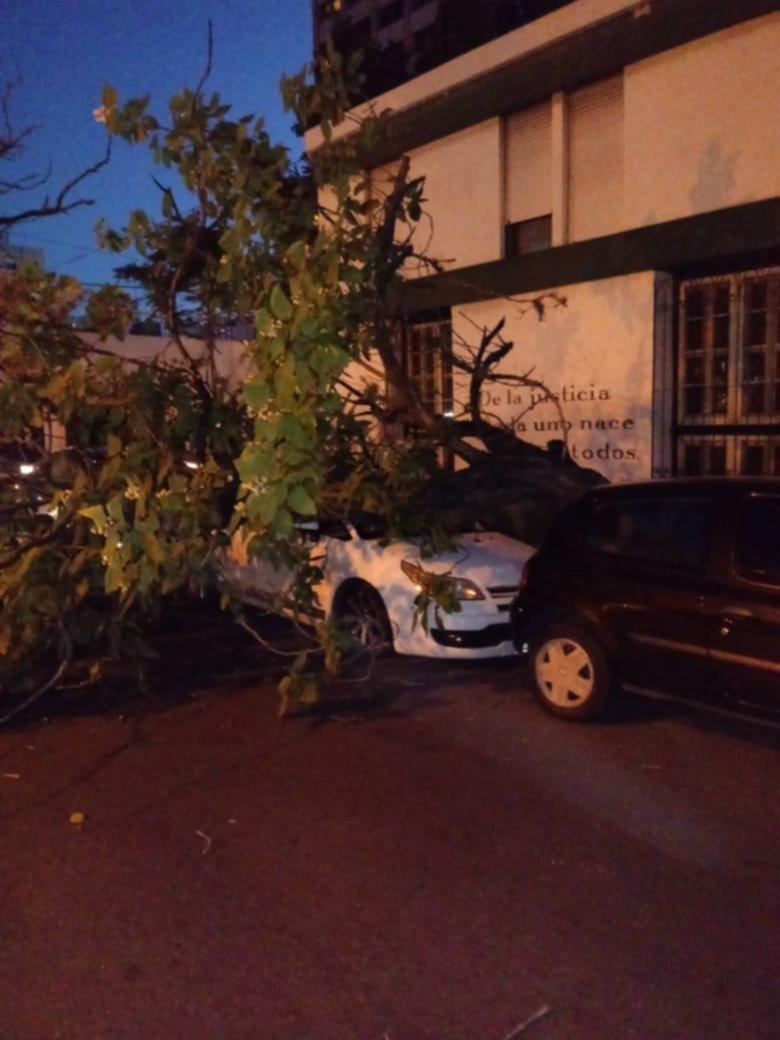 Sin viento y sin lluvia, un árbol cayó sobre un auto
