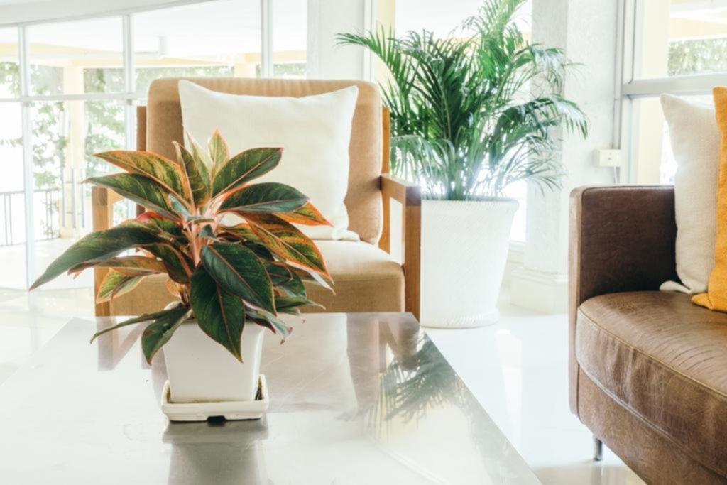 Feng shui con plantas hogar for Decorar departamentos con feng shui