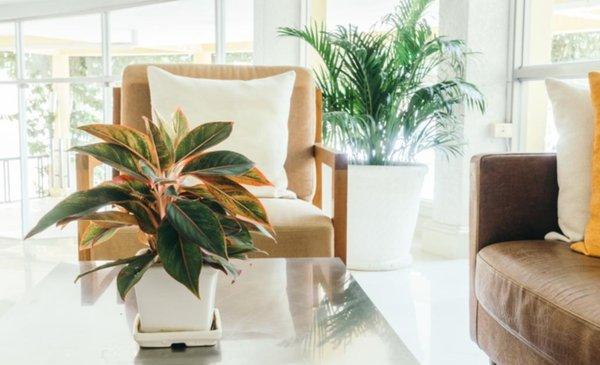 Feng shui con plantas hogar - Feng shui hogar ...