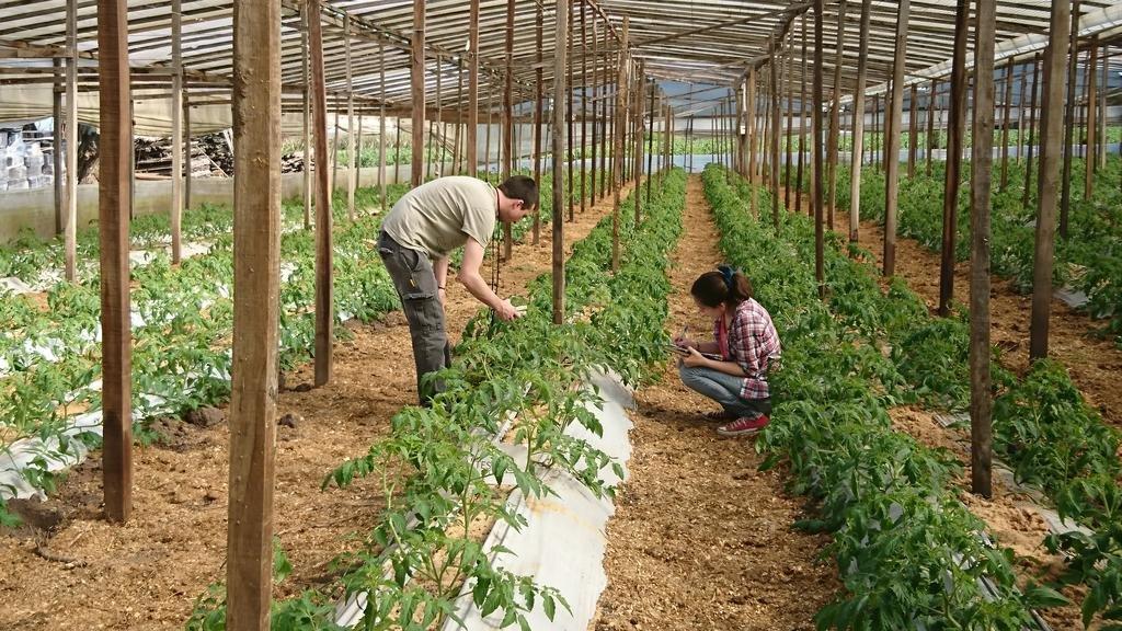 Un tercio de las hortalizas se pierde por causas evitables y la ciencia mete mano