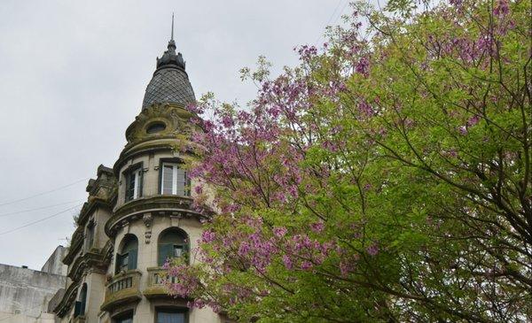 Volvieron las nubes y la primavera se escondió - La Ciudad - Diario El Dia. www.eldia.com