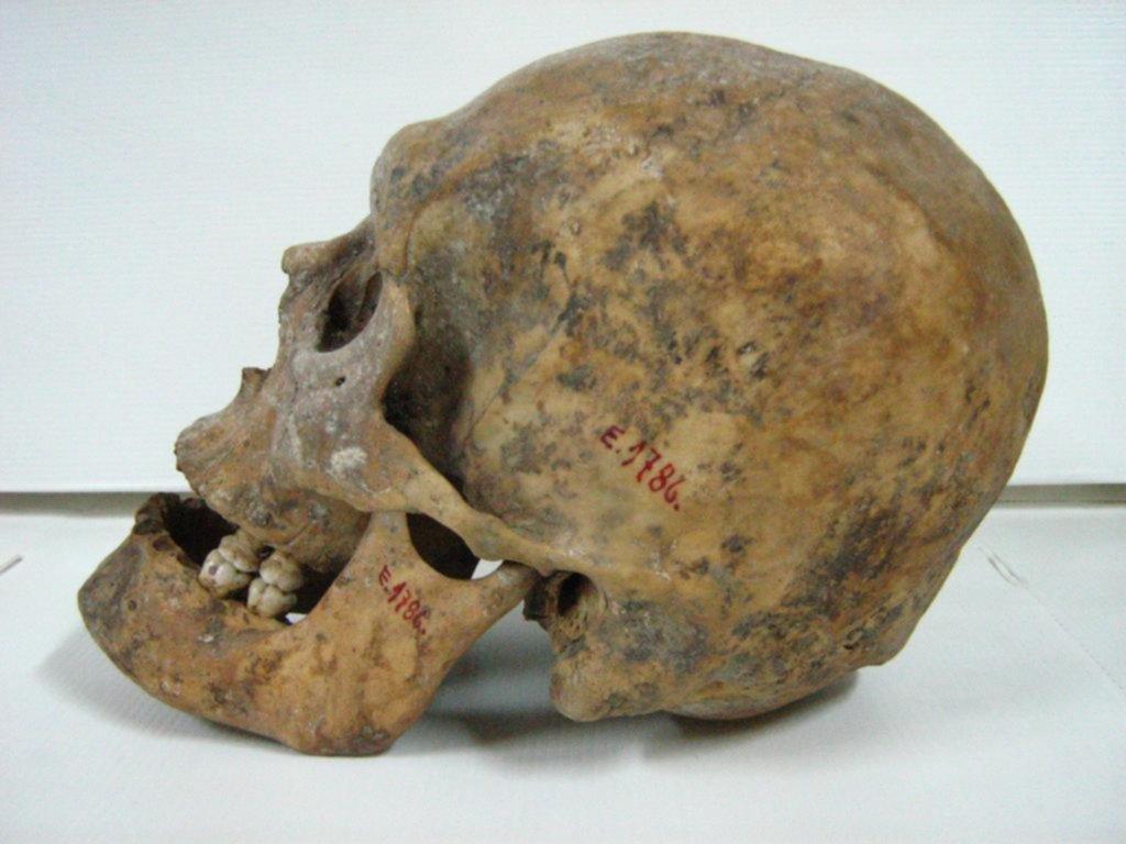 Restituirán el esqueleto de un mapuche asesinado