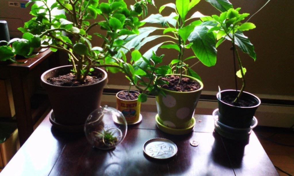 Un estudio que acaba con un mito: las plantas con maceta no purifican el aire