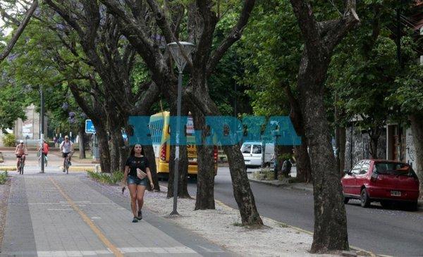 Los jacarandás aún no tienen su brillo característico esta primavera - La Ciudad - Diario El Dia. www.eldia.com