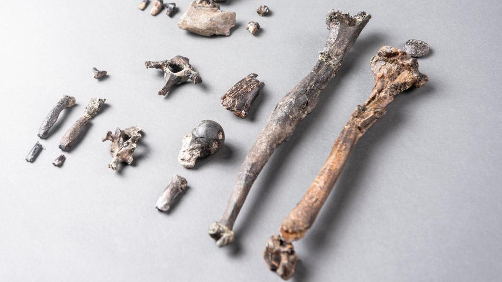 El hallazgo de restos fósiles de un simio sugiere que aprendimos a caminar erguidos en los árboles