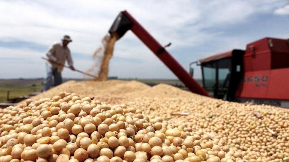Crece la superficie sembrada de soja, y bajan maíz y girasol