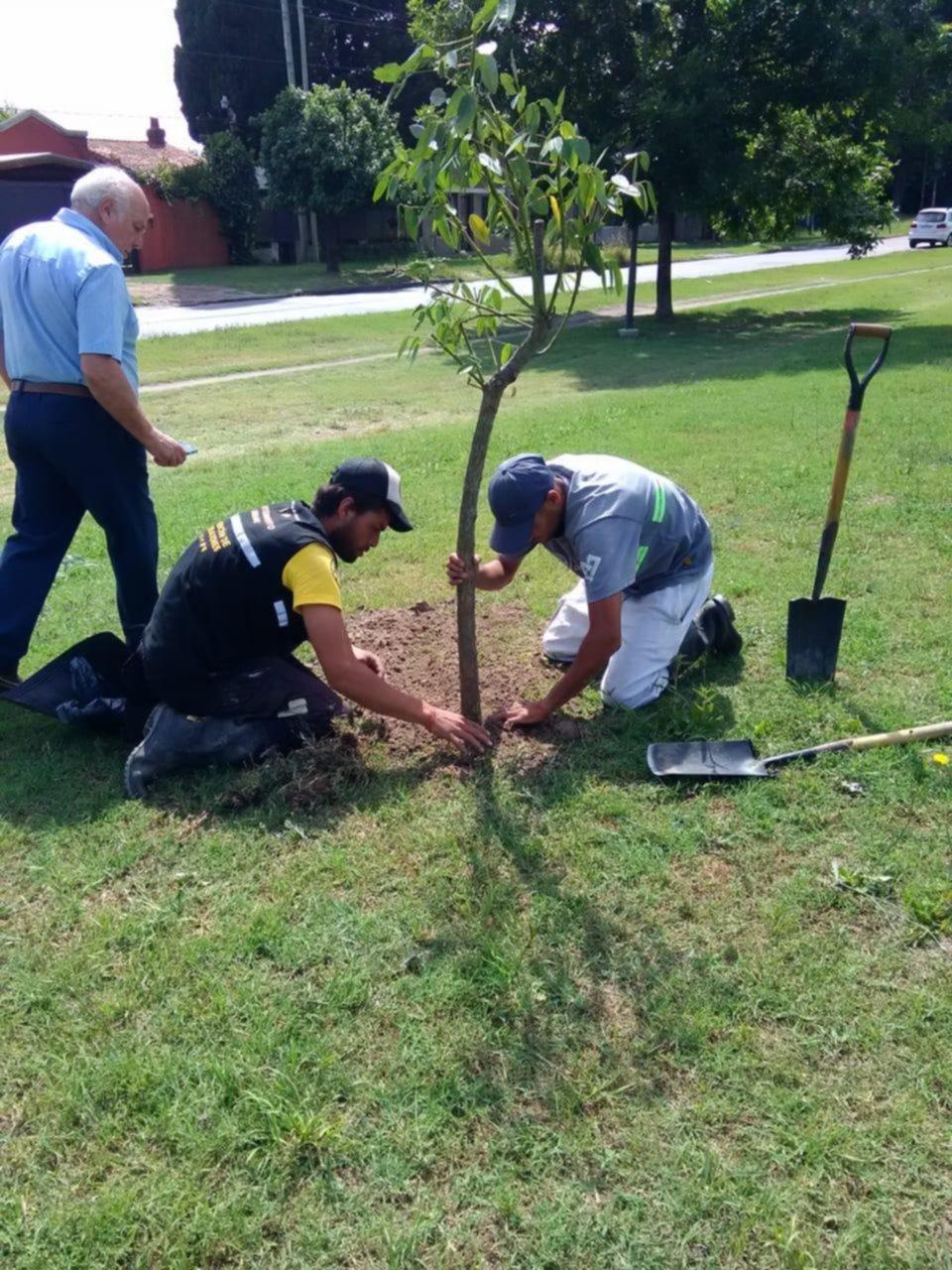 Ambientalistas celebraron el día de la flor nacional plantando árboles