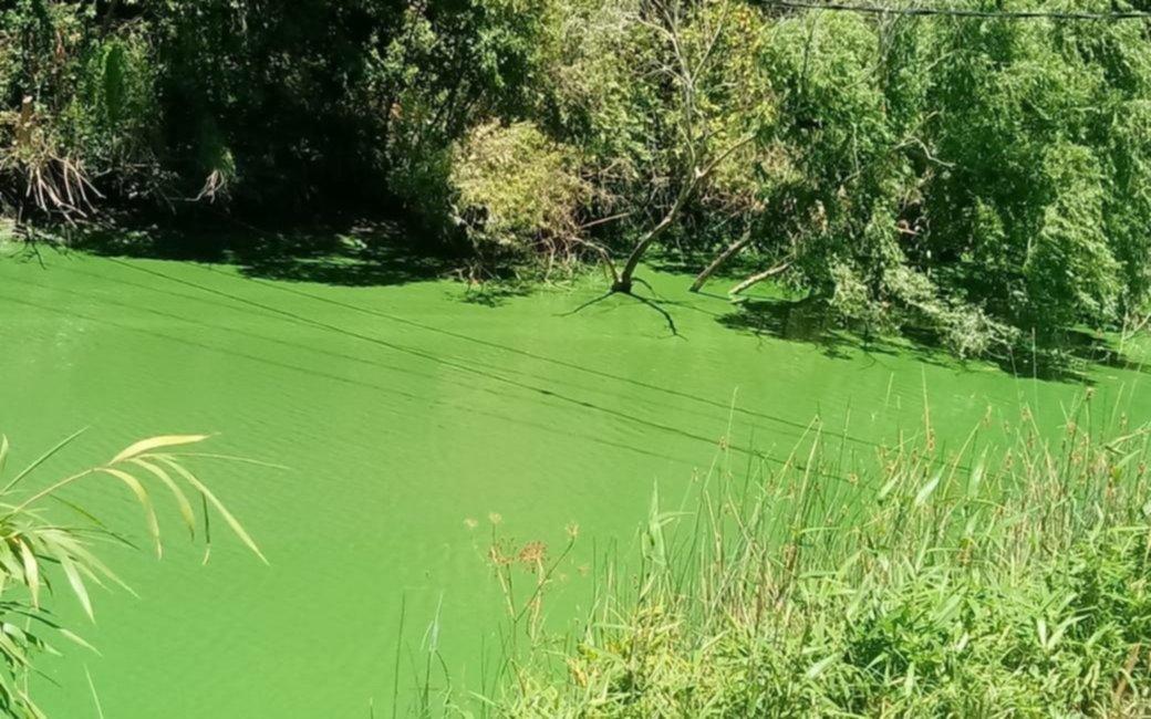 Falta de agua por algas en el río: ¿cuándo volverá el suministro en La Plata, Berisso y Ensenada?