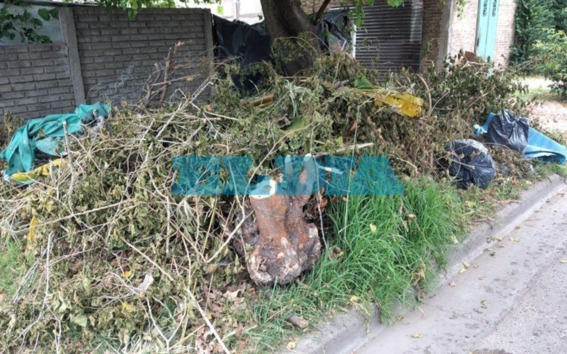 Se acumulan las ramas y los residuos no habituales en 21b, entre 472 y 473
