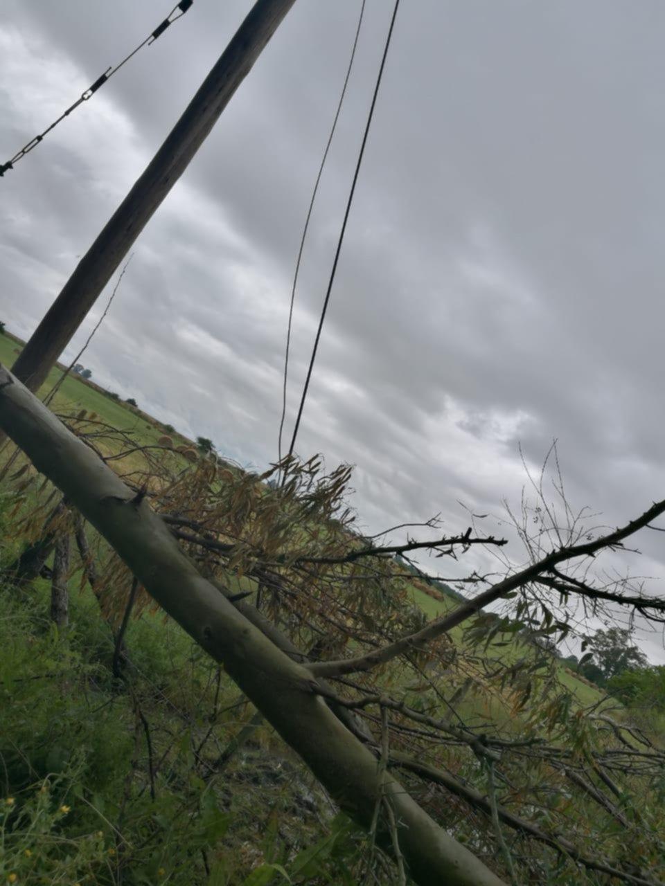 El viento derribó árboles en Magdalena