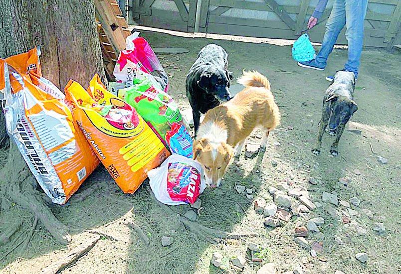 """Alumnos del Colegio Lincoln donaron 950 kilos de alimentos para 600 perros del """"Titucha"""""""