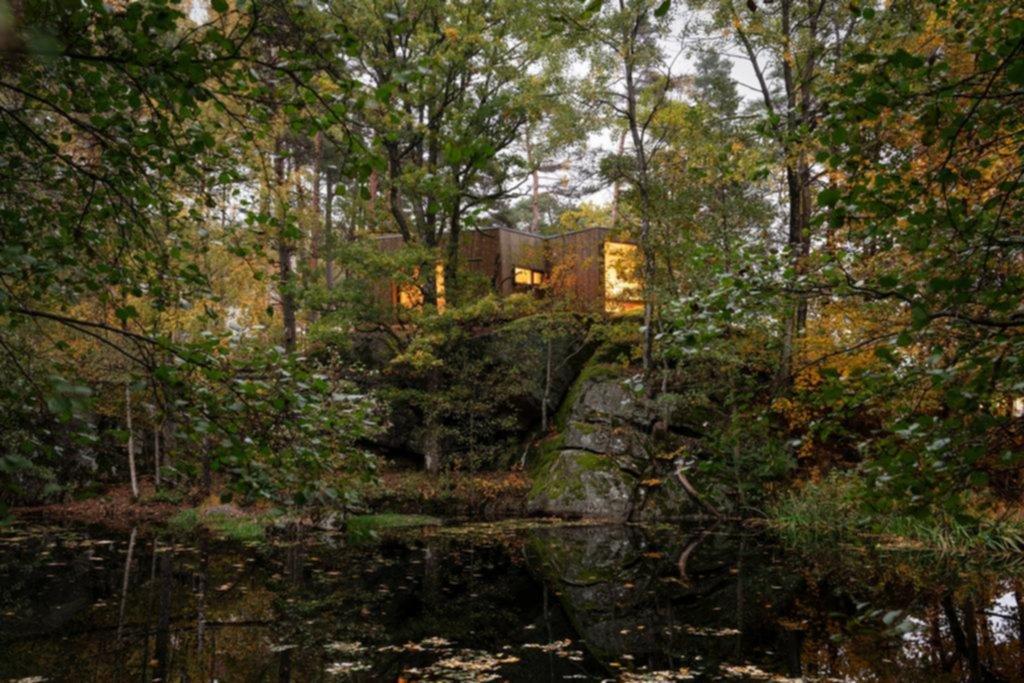 Sanar en el bosque