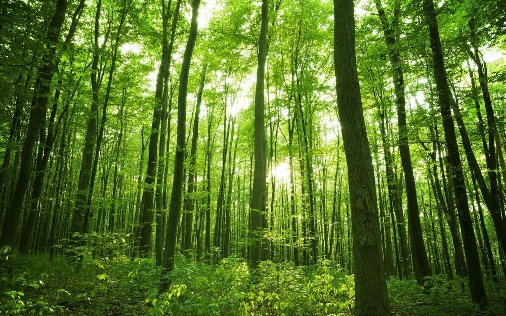 """Ambientalistas proponen crear un """"sendero verde"""" que conecte a todo el planeta"""