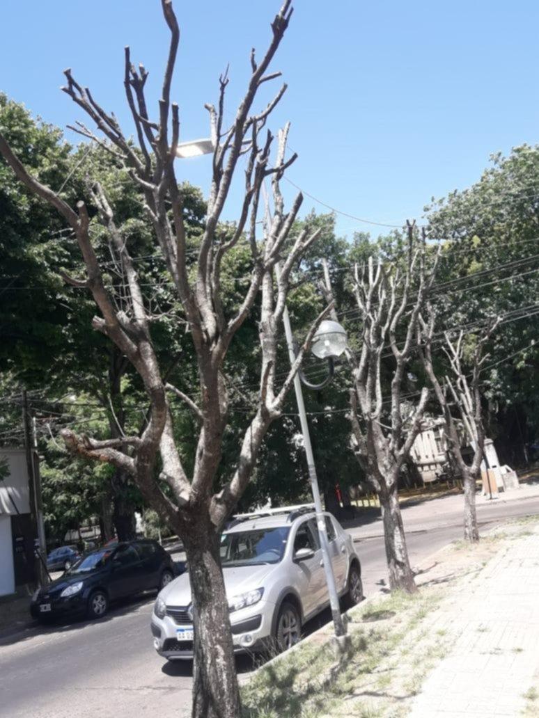 Denunciaron la tala de árboles que terminaron secándose