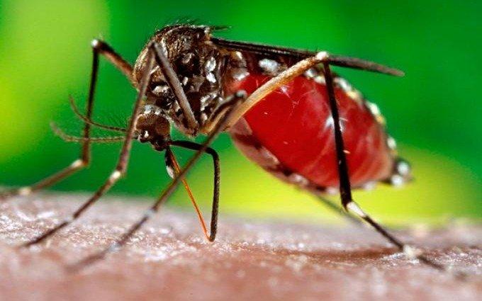 Los mosquitos llegaron a la Ciudad y avanzan las tareas de fumigación: consejos para el hogar