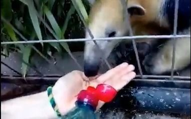 Se metió en el ex Zoo platense y filmó a los animales en medio de la sofocante ola de calor