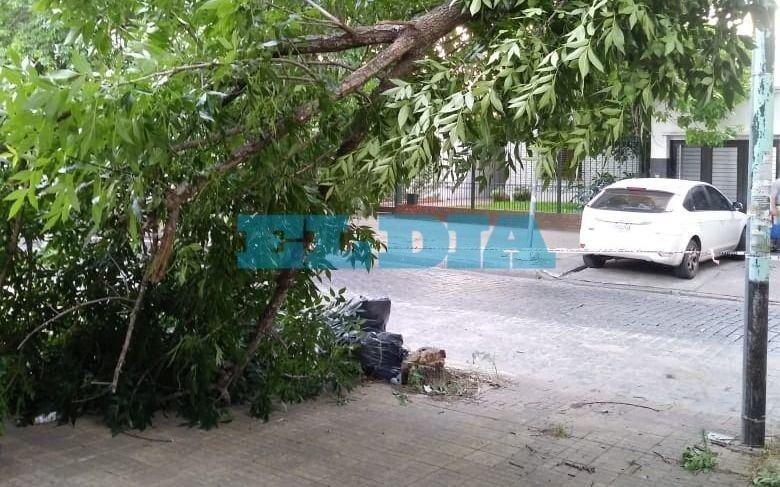"""Advierten por árbol """"a punto de desmoronarse"""" en 62 entre 8 y 9"""