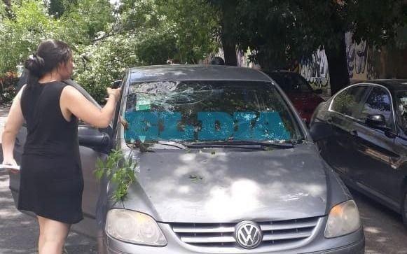 """Una familia """"rozó la tragedia"""": iban en auto y se les cayó un árbol encima en 10, 57 y 58"""