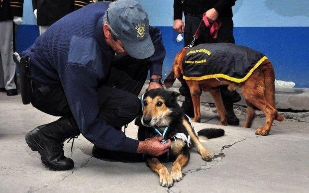 """Se nos fue """"Corbata"""", el perro sabueso más famoso de la Policía"""