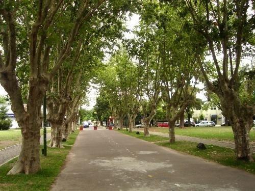 Lanzan la expedición urbana guiada para conocer más sobre los árboles locales